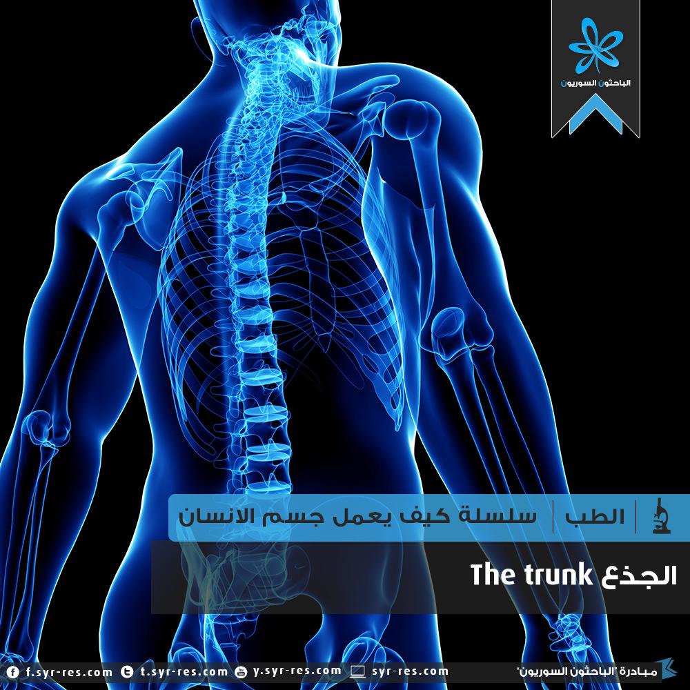 6b0332d28c1fd الباحثون السوريون - سلسلة كيف يعمل جسم الانسان؟ الهيكل العظمي - عظام ...