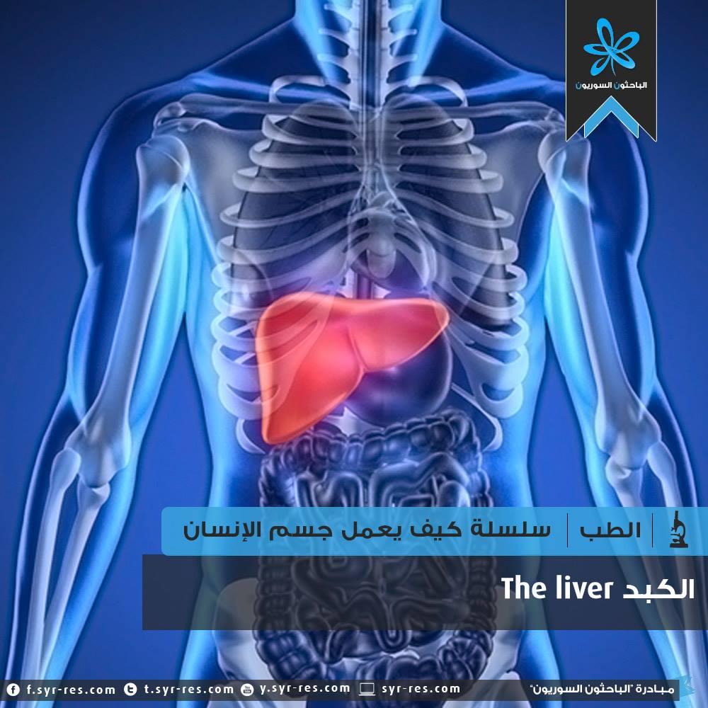 30d0766439461 الباحثون السوريون - سلسلة كيف يعمل جسم الانسان؟ - الجهاز الهضمي  الكبد