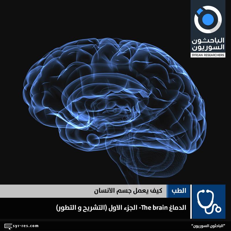 176831f2d5232 الباحثون السوريون - سلسلة