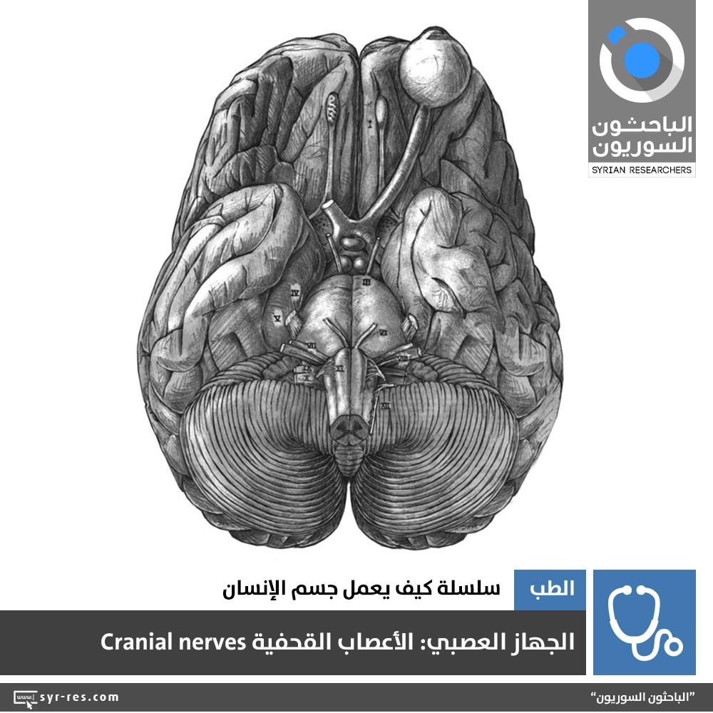 bbc169d125e60 ... كمراكزَ قيادية للجهاز العصبي؛ تتلقّى التنبيهات المختلفة لترسل استجابةً  لها الأوامرَ المناسبة، ولكي يتمّ التواصلُ بين هذه المراكز وبقية أنحاء الجسم  تنشأُ ...