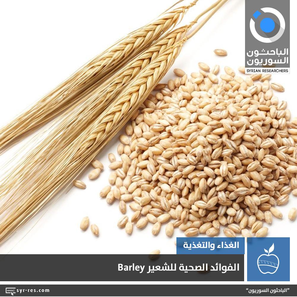 الباحثون السوريون الفوائد الصحية للشعير Barley